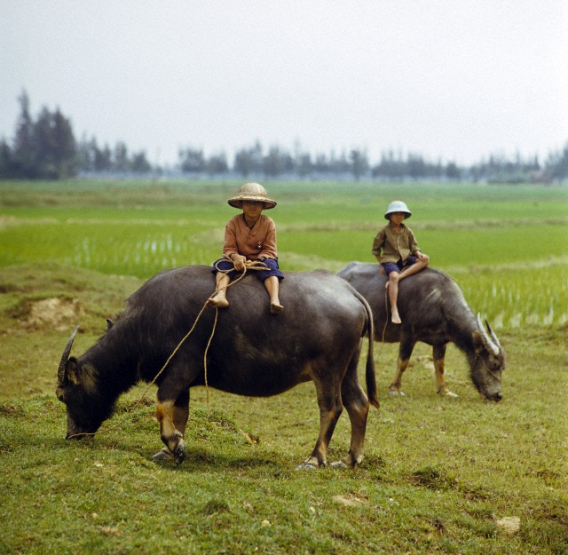 Ảnh đẹp đồng quê Việt Nam