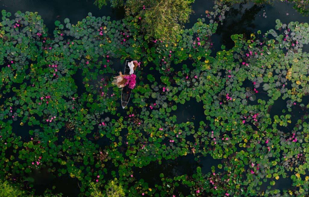 Cảnh đẹp Việt Nam đầm sen