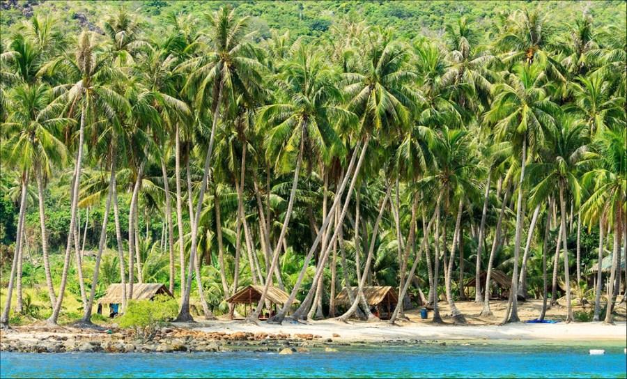 Cảnh đẹp Việt Nam hàng dừa ven biển