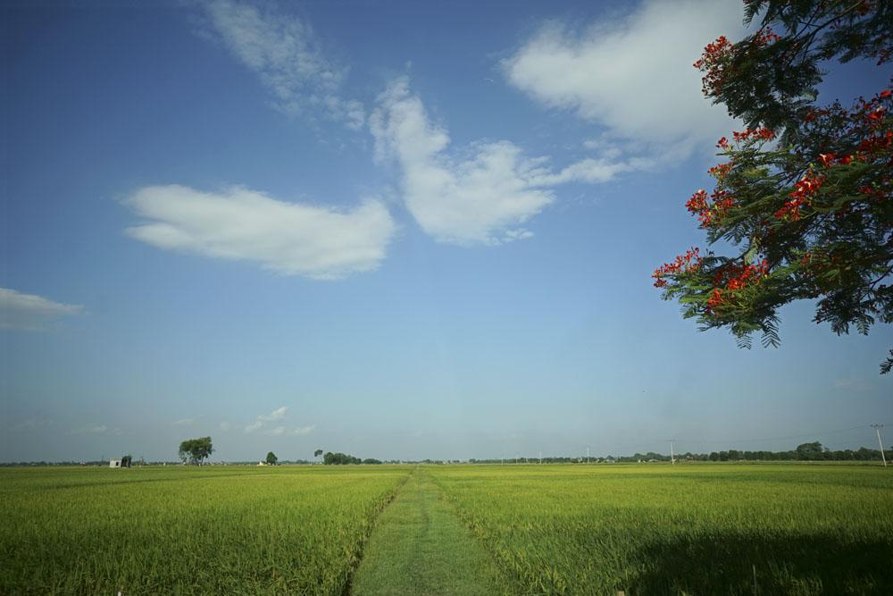 Cảnh đồng quê Việt Nam đẹp