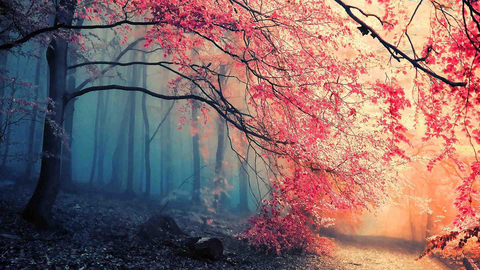 Hình nền thiên nhiên đẹp kích thước Full HD