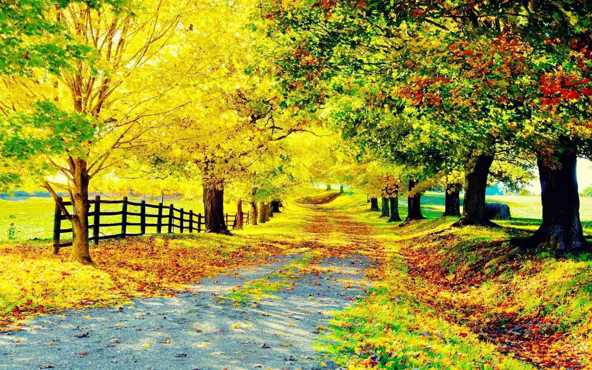 Hình nền thiên nhiên mùa thu kích thước lớn