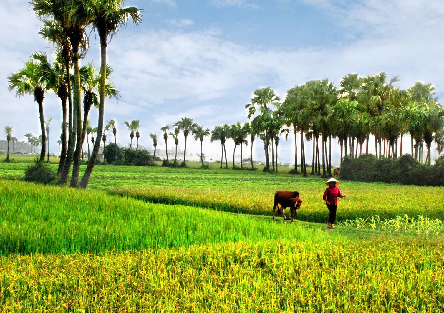 Phong cảnh đồng quê Việt Nam đẹp
