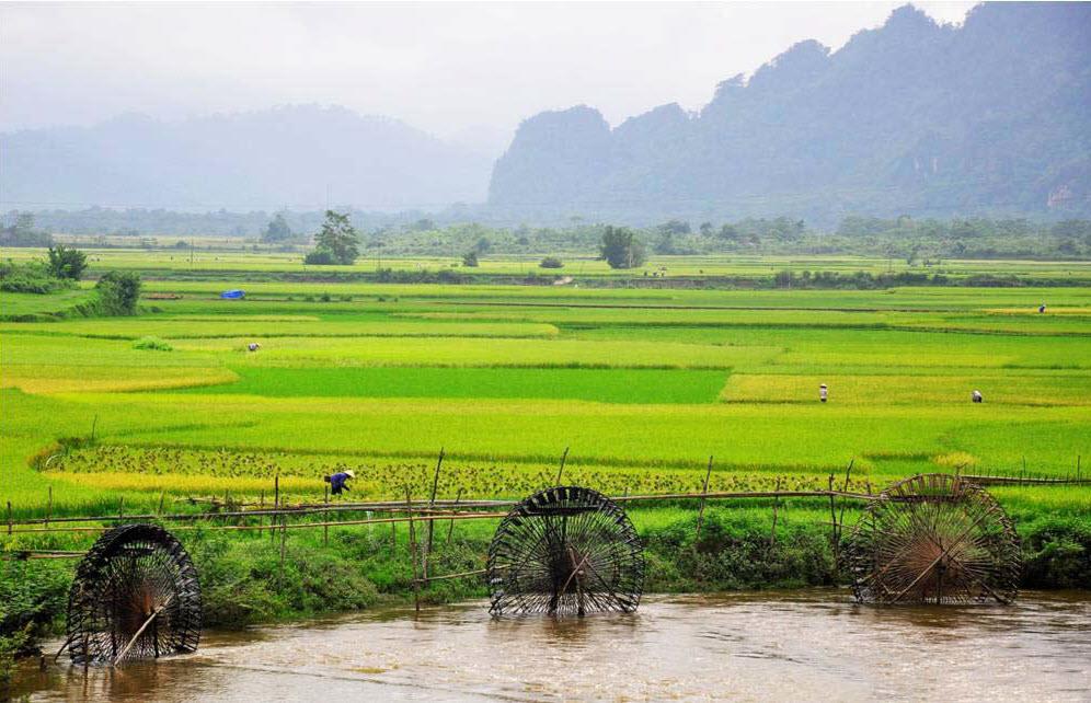 Phong cảnh đồng quê Việt Nam