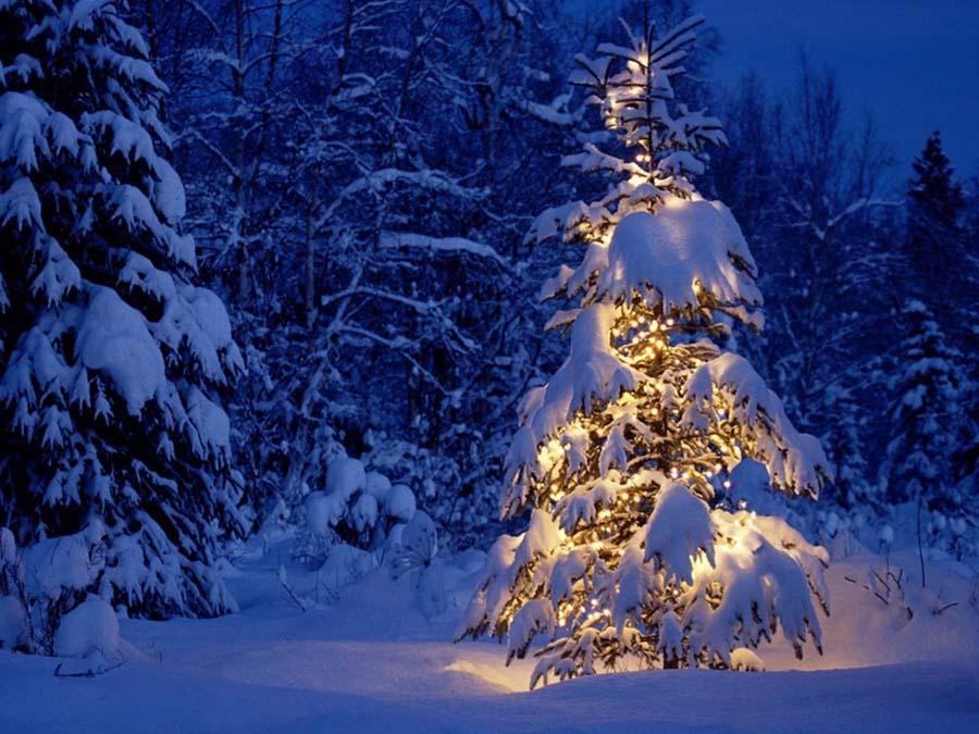 Hình ảnh cây thông noel ngoài trời