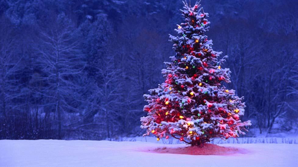 Hình ảnh cây thông noel trong tuyết