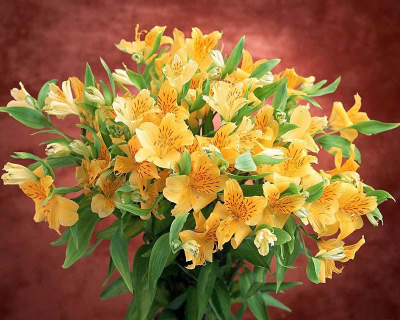 Hình ảnh hoa ly đà lạt đẹp và ấn tượng nhất
