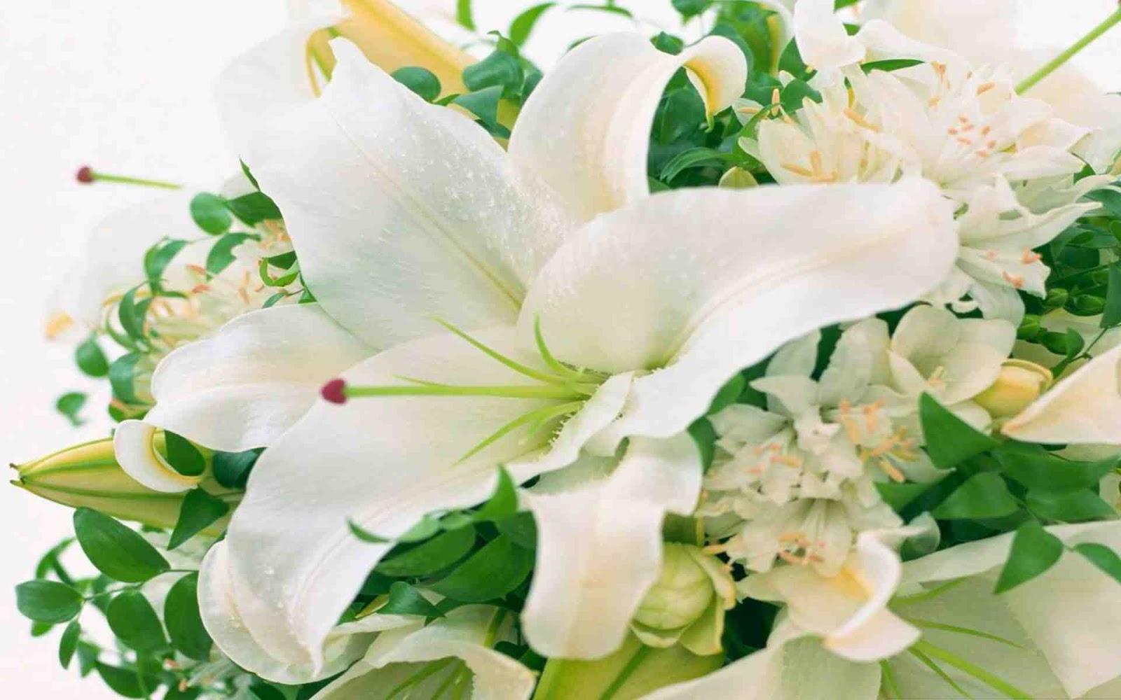 Hình ảnh hoa Ly trắng đẹp tinh khôi