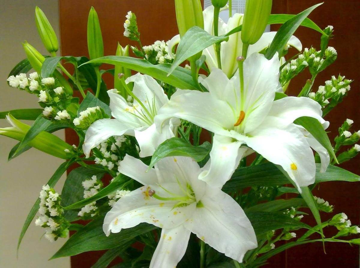 Hoa ly trắng đẹp nhất