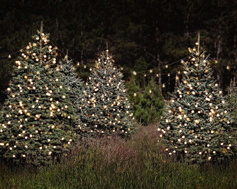 Những cây thông noel đẹp nhất