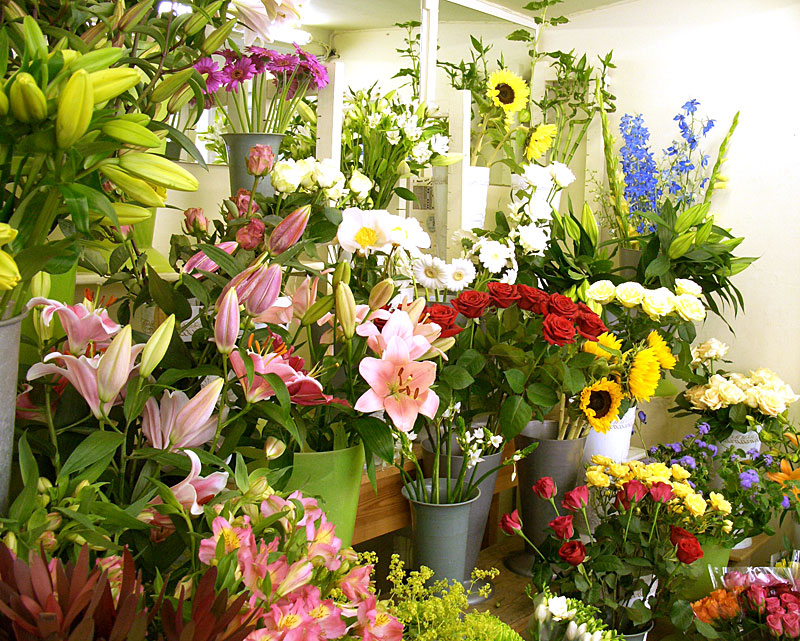 Tổng hợp cửa hàng bán hoa Ly đẹp nhất
