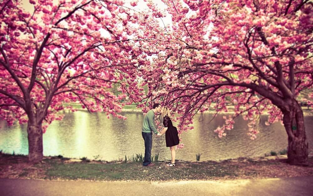 Ảnh đẹp hoa anh đào Nhật bản lãng mạn