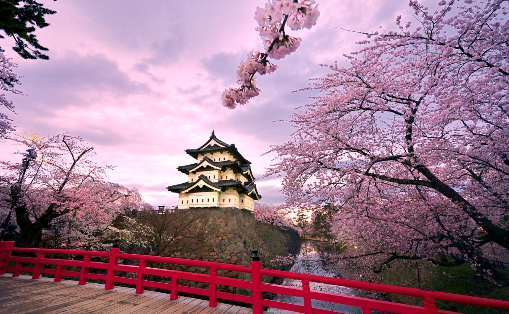Bài hát về hoa anh đào Nhật bản