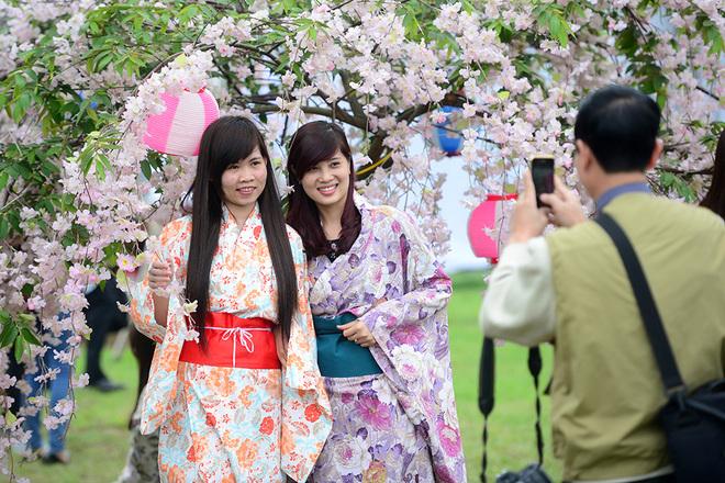 Cô gái xinh đẹp với lễ hội hoa anh đào Nhật bản