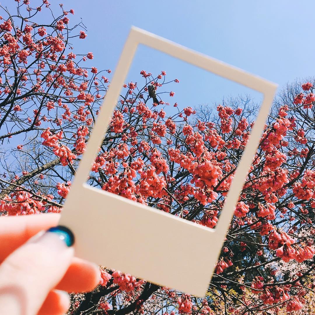 Địa điểm ngắm hoa anh đào đẹp nhất ở Nhật bản