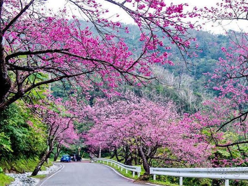 Du lịch nhật bản xem hình ảnh hoa anh đào đẹp nhất