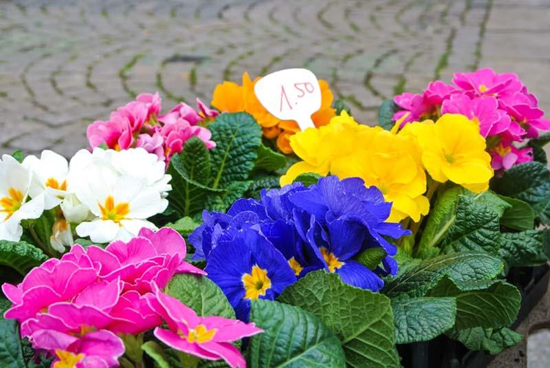 Hình ảnh bán hoa anh túc trong dịp lễ