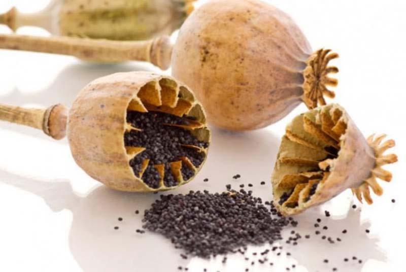 Hình ảnh hạt của loài hoa anh Túc