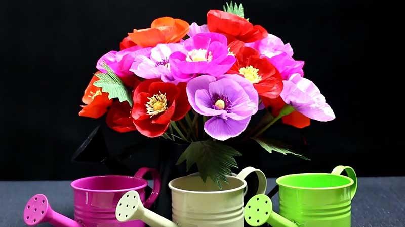 Hình ảnh trồng hoa anh túc