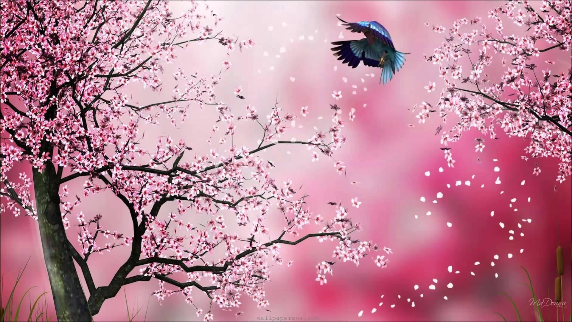 Hình ảnh vẽ hoa anh đào Nhật bản đẹp nhất