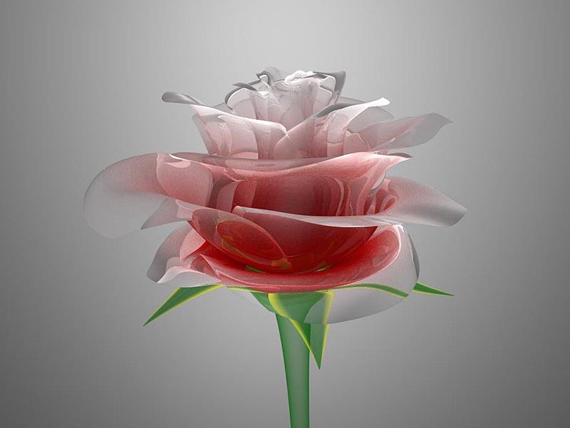 Hình vẽ cây hoa anh Túc đẹp nhất