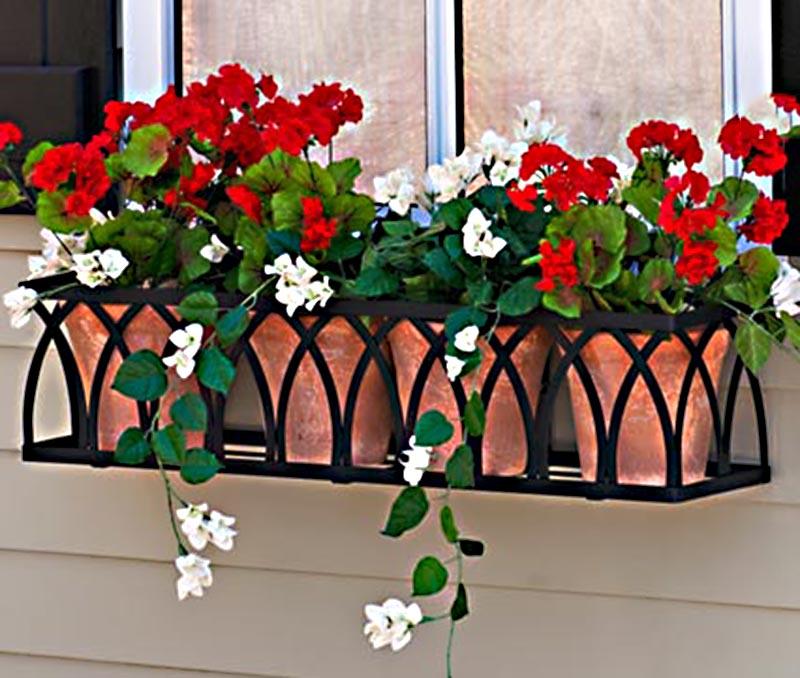 Hoa anh thảo không gian sống đẹp