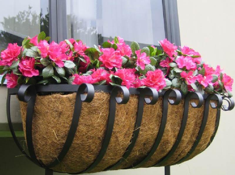Kĩ thuật trồng và chăm sóc hoa anh thảo
