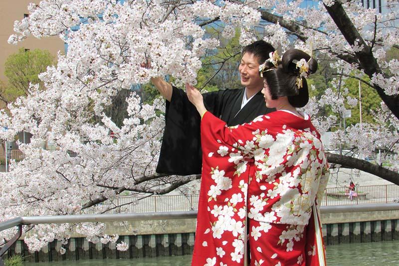 Kyoto lộng lẫy hoa anh đào Nhật bản