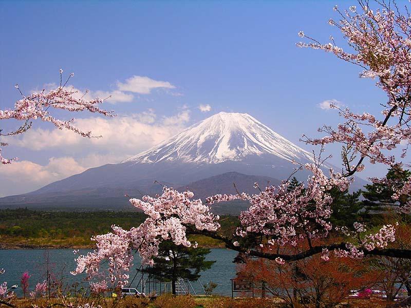 Lịch sử hoa anh đào ở Nhật Bản