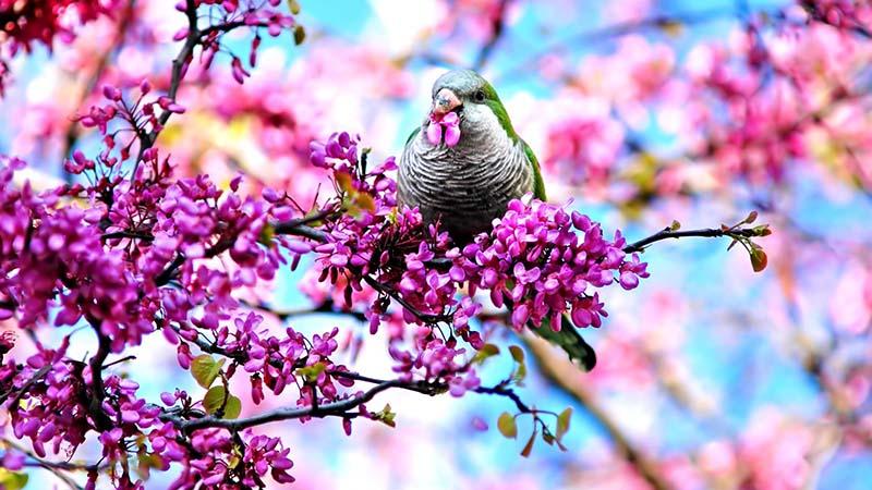 Ngắm hoa anh đào Nhật Bản đẹp nhất