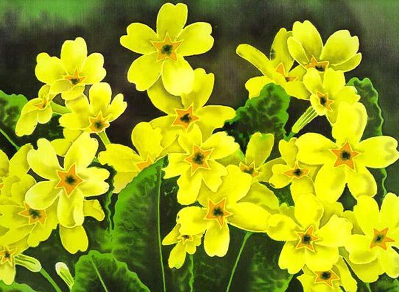 Những hình ảnh hình nền hoa anh thảo đẹp mê hồn