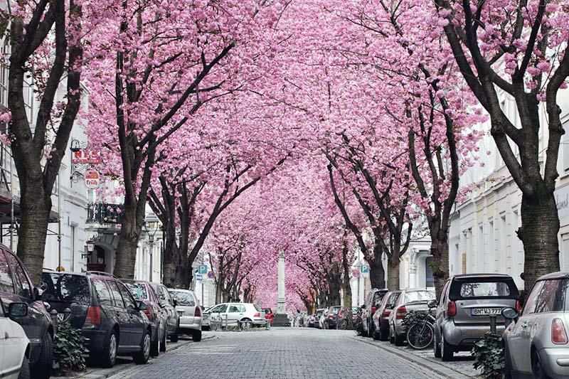 Những nơi ngắm hoa anh đào Nhật Bản đẹp nhất