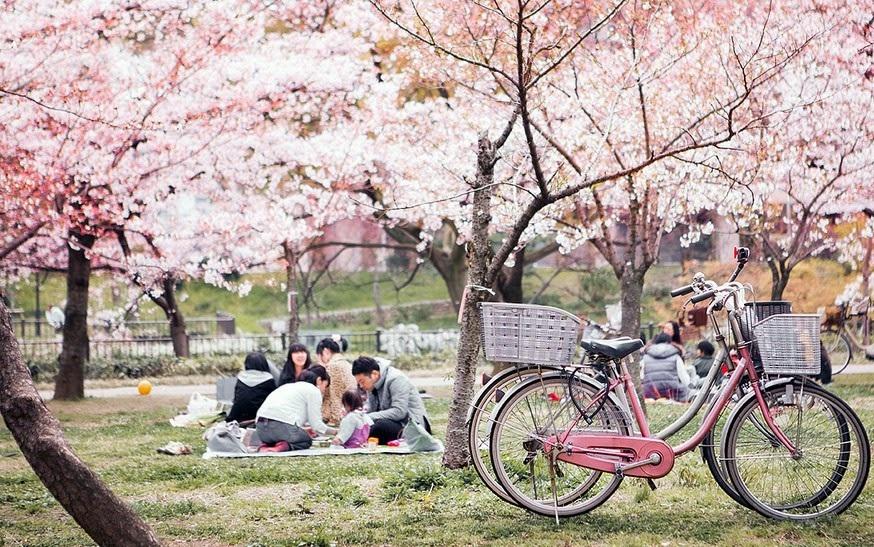 Tìm hiểu lễ hội hoa anh đào ở Nhật bản