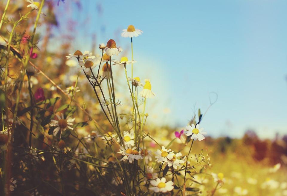 Ảnh đẹp cây cỏ mùa hè