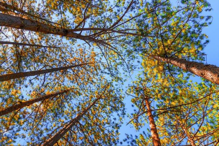 Ảnh mùa thu đẹp lá vàng