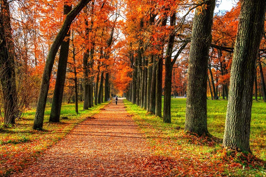 Ảnh mùa thu đẹp nhất thế giới