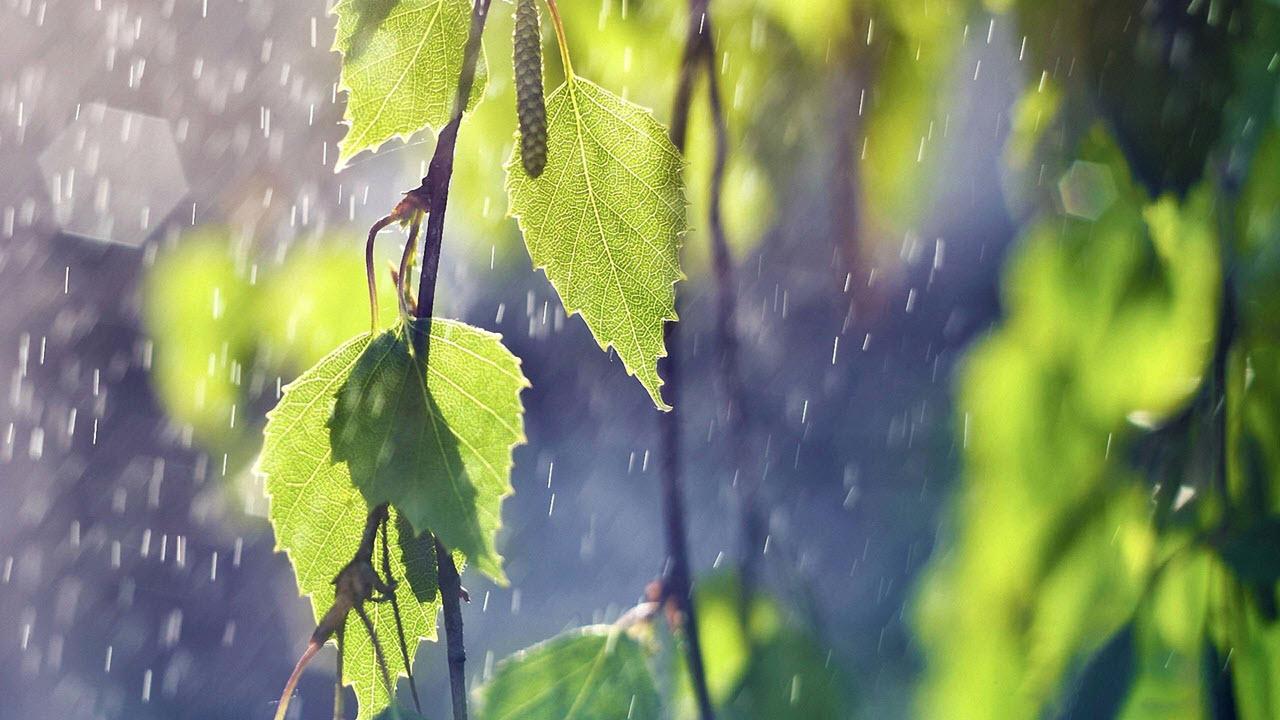 Hình ảnh cơn mùa mùa hè