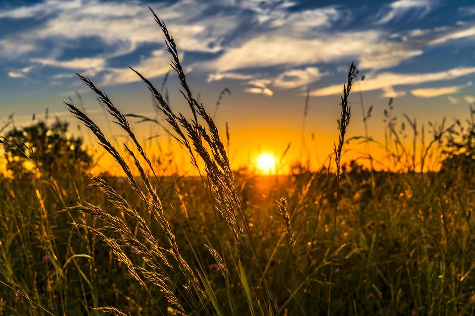 Hình ảnh đẹp đồng cỏ mùa hè