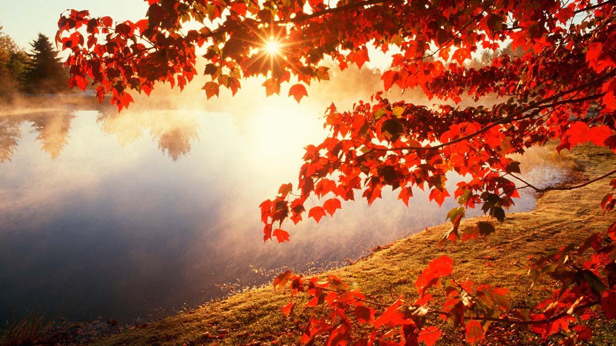 Hình ảnh đẹp mùa thu lá đỏ