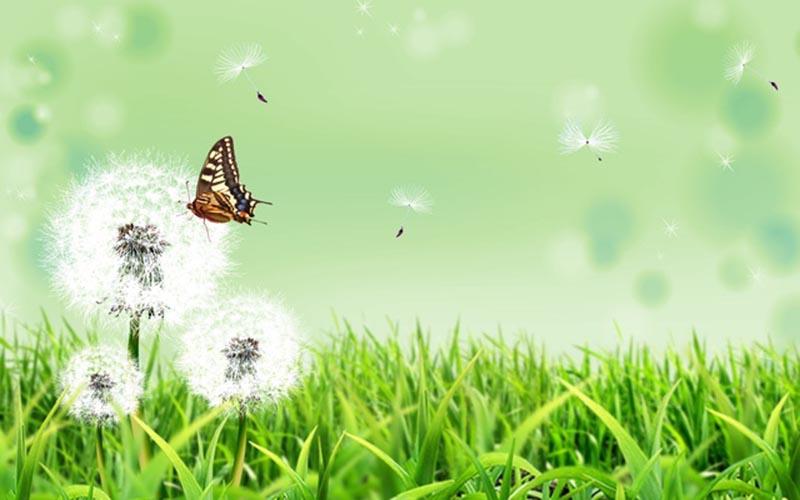 Hình ảnh đẹp về hoa bồ công anh cho laptop