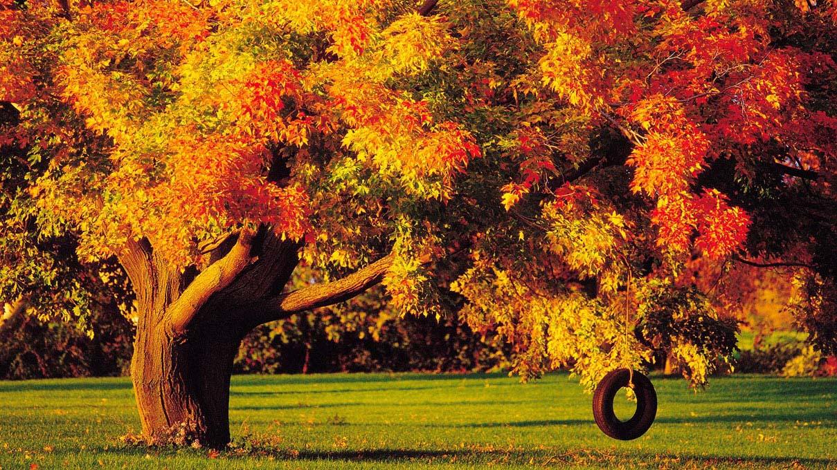 Hình ảnh đẹp về mùa thu trên thế giới