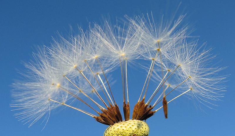 Hình ảnh hạt hoa anh đào đẹp và độc đáo nhất