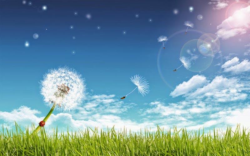 Hình ảnh hoa bồ công anh trong gió