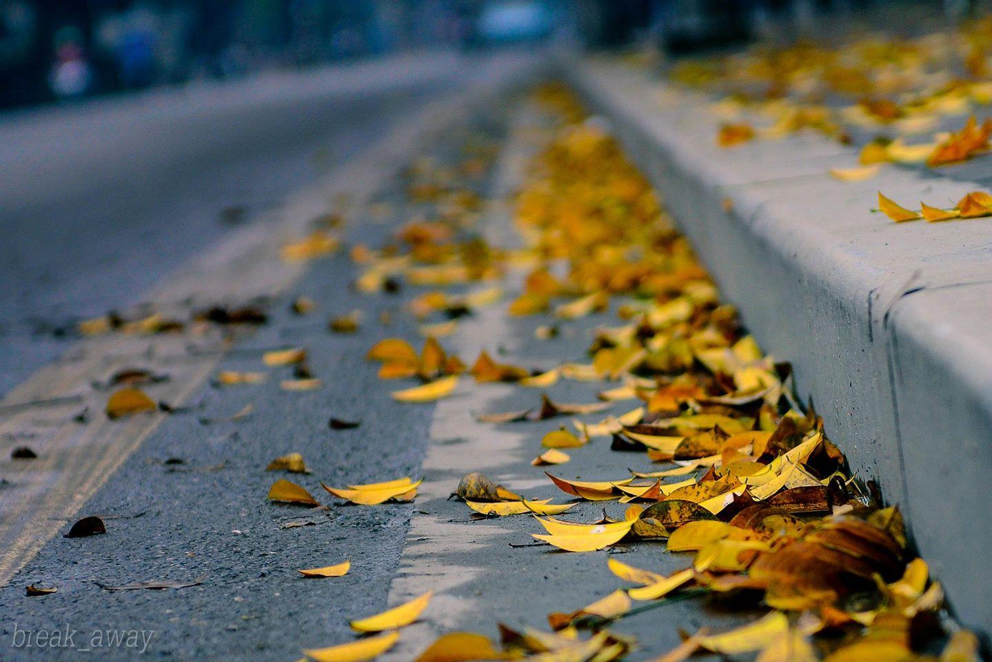 Hình ảnh lá mùa thu đẹp
