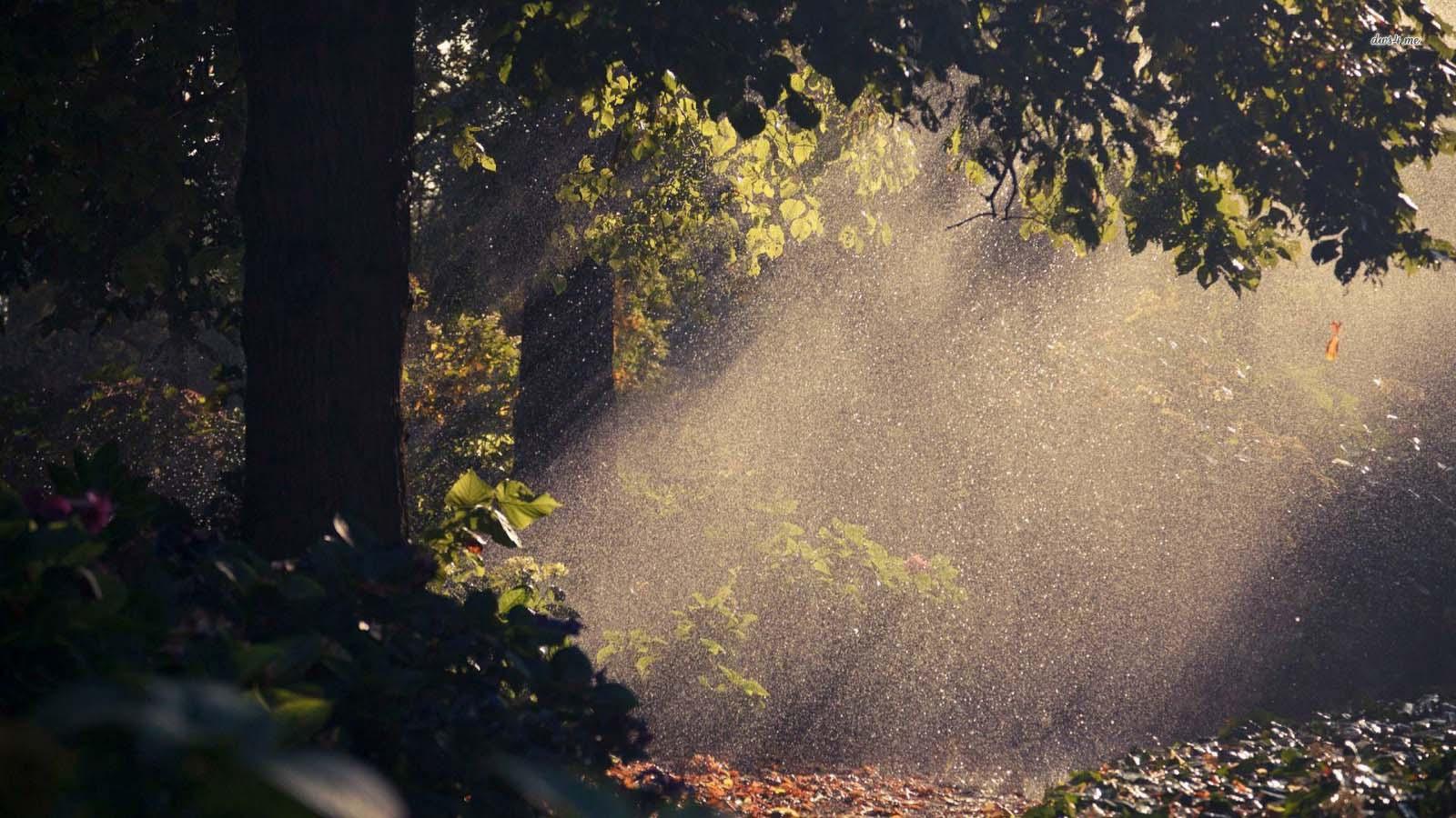 Hình ảnh mưa mùa hè