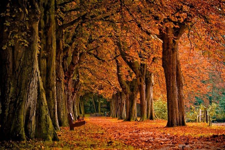 Hình ảnh mùa thu buồn mà đẹp