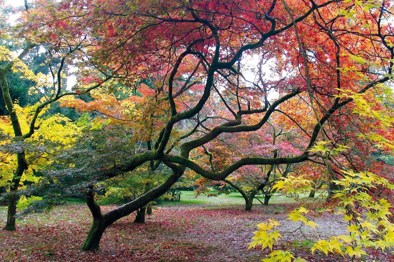 Hình ảnh mùa thu đẹp nhiều sắc màu
