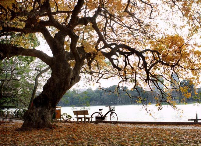 Hình ảnh mùa thu đẹp