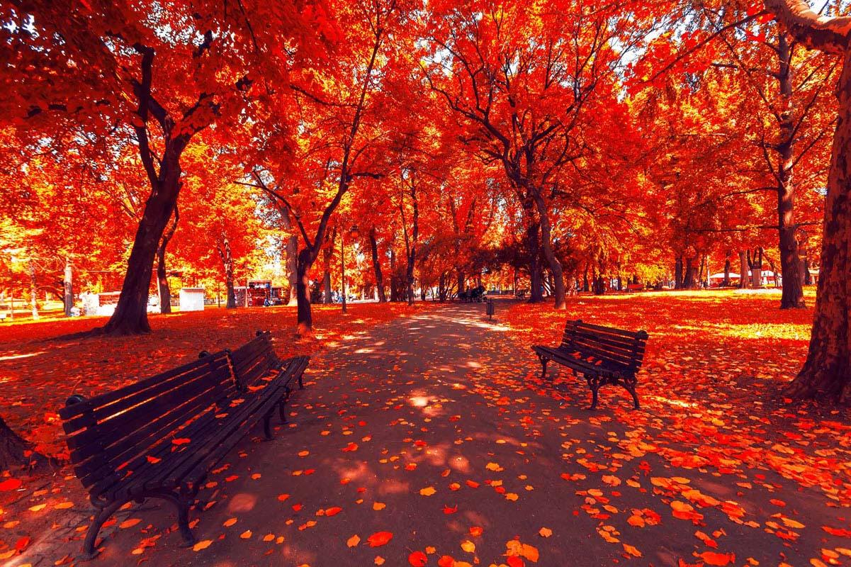 Hình ảnh mùa thu lá đỏ