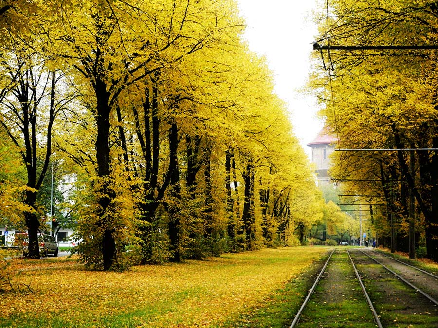 Hình ảnh mùa thu lá rơi